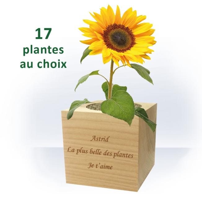 Plante Ecocube à Personnaliser pour  Offrez un cadeau écolo etorig...