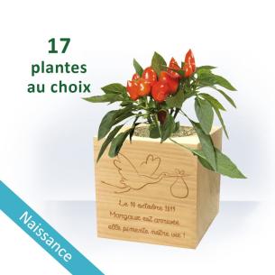 Plante Ecocube NAISSANCE à Personnaliser - Cigogne pour  Dame Cigog...
