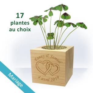 Plante Ecocube MARIAGE à Personnaliser - Cœurs Enlacés