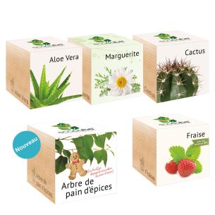 17 semences de plantes disponnibles